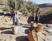 トウジンビエの脱穀[25588001174] - 写真素材・ストックフォト|アマナイメージズ