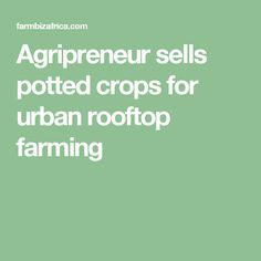 Agripreneur sells potted crops for urban rooftop farming