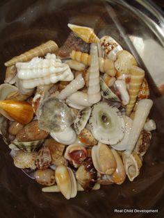 How to make your seashells shiny