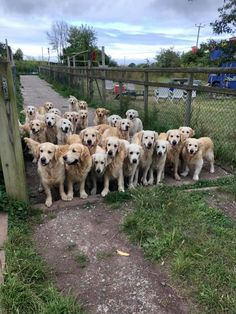 A Golden Gate Of Good Boys And Girls Golden Gate, Funny Cute, Cute Dogs, Boy Or Girl, Boys, Baby Boys, Children, Senior Guys, Funny Dogs