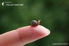 Zebra Snail - GARDEN RANGE. $14.00, via Etsy.