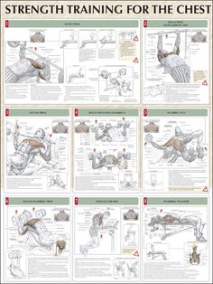 Strength-Training-For-The-Chest-Chart.jpg 1,125×1,500 pixels