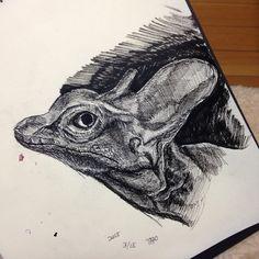 トカゲ  ペン画