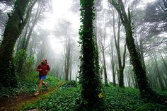 Lauren Lee running through Sintra forest | by Keith Ladzinski