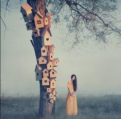 Casas de passarinho