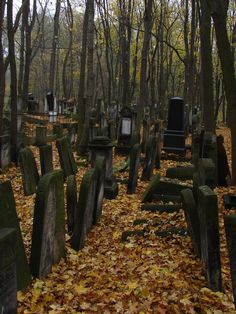 Gypsy Moon's Enchanted Chronicles ~ an old graveyard
