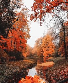 Image shared by Find images and videos about nature red and yellow on We Heart It the app to get lost in what you love melinabrooke Autumn Aesthetic, All Nature, House Nature, Fall Wallpaper, Iphone Wallpaper, Autumn Leaves, Autumn Fall, Autumn Cosy, Happy Autumn
