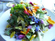 Google Image Result for http://www.fs.fed.us/wildflowers/ethnobotany/food/images/vegetables/saladedibleflowers_nancyCotner_lg.jpg
