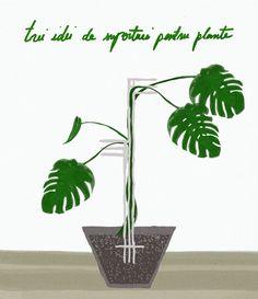 Am un filodendron a cărui înălțime stagnează de un an de zile. Face câte o frunză nouă, moare alta, și el rămâne la aproximativ aceeași mărime ca în trecut. Mi-am dat seama că s-ar putea Planter Pots, Gardening, Lawn And Garden, Horticulture