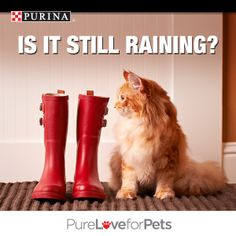 Don't let April showers get you down! Enjoy some R & R and pin your favorite pic of cats or dogs on spring break for a chance to WIN FREE Purina® for a Year. Enter today! Go to http://sweeps.piqora.com/PurinaSpringBreak. NO PURCHASE NECESSARY. Valid in 50 U.S. & D.C. Must be 18+ (19+ in AL & NE; 21+ in MS), & own a cat or dog or both. Ends 3:00 p.m. ET on 4/29/14. Void where prohibited. See Official Rules at http://sweeps.piqora.com/PurinaSpringBreak. #PurinaSweeps