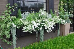 gardens containers gray and white window box gray and white window box Container Flowers, Flowers, White Flowers, Front Garden, Garden Containers, Window Box Flowers, Plants, Moon Garden, White Gardens