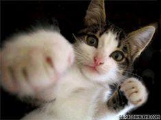 Für die, die uns nicht im Guten zugewandt sind! Vorsicht 2 super Großkatzen!