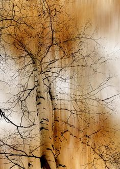 1935 by peter holme iii Watercolor Trees, Watercolor Paintings, Watercolours, Coffee Painting, Photo Tree, Watercolor Techniques, Tree Art, Landscape Art, Painting Inspiration