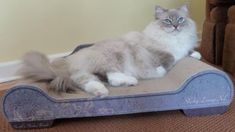 See Photos of Blue Ragdolls - blue colorpoint, mitted, bicolor, lynx, tortie, and blue lynx mitted Ragdolls.