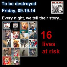 TO BE DESTROYED: 16 Dogs to be euthanized by NYC ACC- FRI. 9/19/14. This is a HIGH KILL shelter group. YOU may be the only hope for these pups! ****PLEASE SHARE EVERYWHERE!!To rescue a Death Row Dog, Please read this: http://urgentpetsondeathrow.org/must-read/  To view the full album, please click here:  https://www.facebook.com/media/set/?set=a.611290788883804.1073741851.152876678058553&type=3