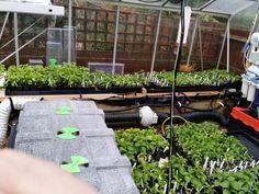 Dean Finlay's incredible chilli lab http://www.greenhousesensation.co.uk/hydropod-cuttings-propagators.html
