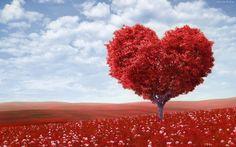 Łąka miłości