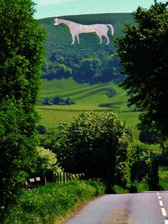 The Westbury White Horse, Wiltshire, England - very old hill figure. Salisbury Plain