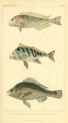 BioDiversity - fish