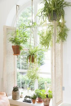 12 Common House Plants That Filter Your Air All Day Spider plants are amazing for purifying air and are non-toxic to your kitties! (List of pet friendly plants) Common House Plants, Cat Safe House Plants, Hanging Air Plants, Plants Indoor, Potted Plants, Indoor Herbs, Window Hanging, Open Window, Outdoor Plants
