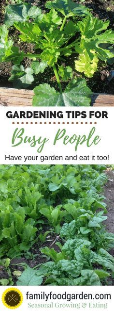 How to garden when you have no time