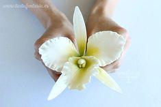 Paso a paso Orquídea Frosting Flowers, Fondant Flowers, Sugar Flowers, Paper Flowers, Polymer Clay Flowers, Ceramic Flowers, Buttercream Techniques, Orchid Cake, Fondant Flower Tutorial