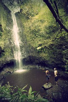 This waterfall hike on Oahu is best attempted after some rain. It's a relatively easy hike to a waterfall and pool deep enough for jumping. Oahu, Hawaii.