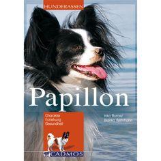Papillon - Hunde