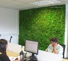 Preserved Bun Moss Wall supplied for an Office Location