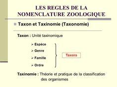 En nomenclature botanique, un taxon est habituellement affecté à un rang taxinomique dans la hiérarchie systématique. Le rang de base est l'espèce, qui définit un ensemble d'individus interfécondables. Le second en importance est le genre (genus) : une espèce ne peut pas recevoir un nom botanique sans être affectée à un genre. Le rang de troisième importance est la famille.