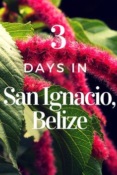 Explore top things to do in San Ignacio, Belize and how to spend 3 days in this jungle paradise. Ziplines, cave tubing, ruins - San Ignacio has it all! Belize Honeymoon, Belize Vacations, Belize Travel, Belize Hotels, Honeymoon Trip, Honeymoon Destinations, Asia Travel, Honduras, Costa Rica