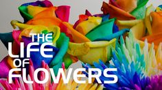 The Life of flowers (Жизнь цветов) by VOROBYOFF PRODUCTION. This is a simple video with the music.