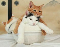 miezekatzen: bowl of cats rebeldiamond: - しののメモ