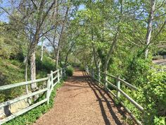 Oso Creek Trail in Mission Viejo. Spring is here and the sycamore trees are leafing out and the skies are perfect!