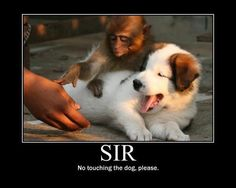 I hate monkeys, but I did laugh at this