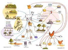 Retrosuburbia: The Melliodora Goat System