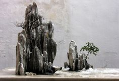 Image from http://www.chinesebonsaigarden.com/images/chinese-bonsai/chinese-bonsai5.jpg.