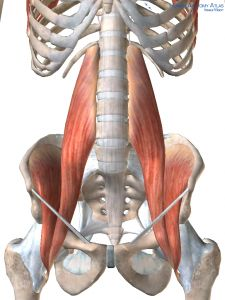 Yoga anatomy Stretch the psoas muscle with lunges and standing poses. #TryMayaYoga #yoga