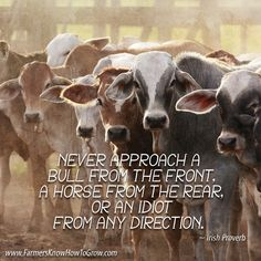 """Never approach a bull from the front, a horse from the rear, or an idiot from any direction."" ~ #IrishProverb #inspirationalquotes #farmlife"