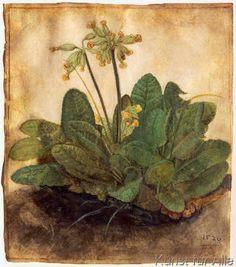 Albrecht Dürer - Schlüsselblume