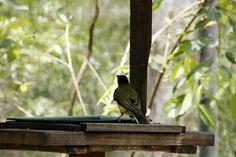 A bird. That's a bird, right?Yeah, a bird.Hartley's crocodile Farm, Queensland