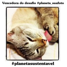Banho mais manhoso, impossível! De tão bonita, esta bela fotografia – feita pela veterinária Sonia Hara – foi a mais votada da categoria Gatos, do desafio #planeta_suafoto no Instagram: http://abr.io/5PlO