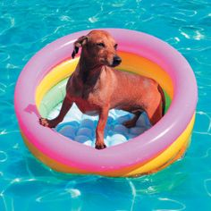 Use these tips to help your pets beat the heat, and prevent dehydration and heat stroke. Beat The Heat, Pet Life, Family Life, Beats, Your Pet, Outdoor Decor, Pets, Tips, Kids