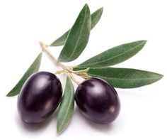Find Ripe Two Black Olives Olive Leaves stock images in HD and millions of other royalty-free stock photos, illustrations and vectors in the Shutterstock collection. Thousands of new, high-quality pictures added every day. Fruits Photos, Sketch Painting, Tree Leaves, Olive Tree, Fruit And Veg, Bottle Design, Trees To Plant, Photo Editing, Royalty Free Stock Photos