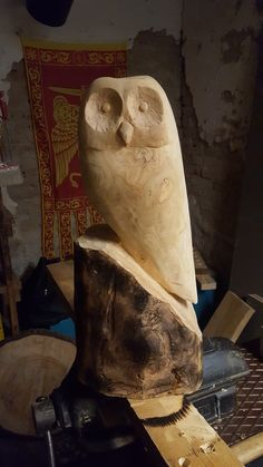 Owl from a log.