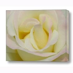 """""""modesty"""" floral gallery-wrapped canvas art from Wendy Vroom Photography for $195 on Square Market"""