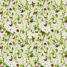 White Lilac by Isabelle Boxall - Grey - Wallpaper : Wallpaper Direct Joyous Celebration, Wall Candy, Lilac Grey, Grey Wallpaper, Lilac Flowers, Fresh Green, Green Leaves, True Colors, Heart Shapes