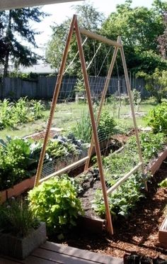 beautiful trellis made of pipes - Google Search