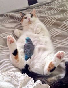 """catasters:  """"Oh Hi!! It's definitely not what is seems!"""""""
