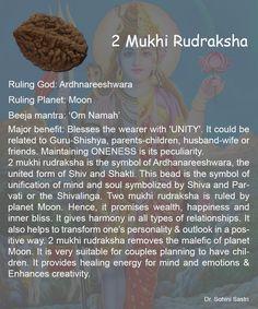 2 Mukhi Rudraksha..